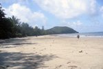 Cape Tribulations
